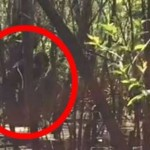 New Bigfoot Video Emerges From Florida