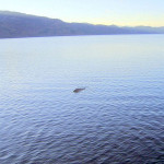 Loch Ness monster seen on camera – Telegraph