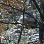 The Mogollon Monster – Fox News 10