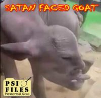 Mutated Evil Goat